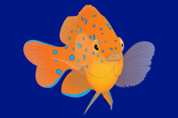 Marine Field Identification