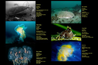 Photos of the Week