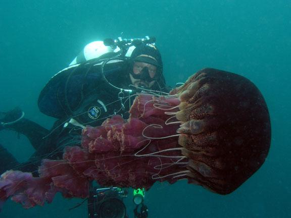 Raising pet jellyfish february 2011 for Jelly fish pet